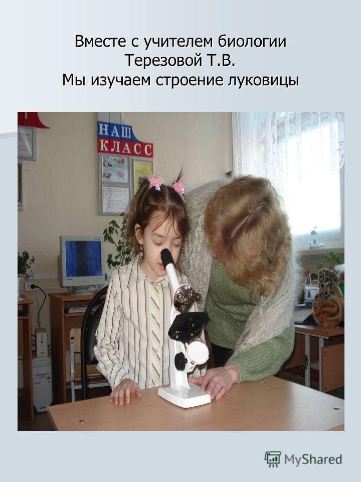 Вместе с учителем биологии Терезовой Т.В. Мы изучаем строение луковицы