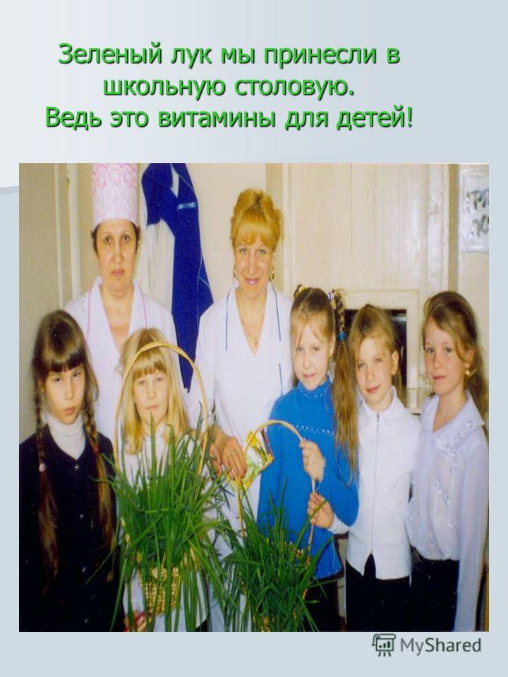 Зеленый лук мы принесли в школьную столовую. Ведь это витамины для детей!