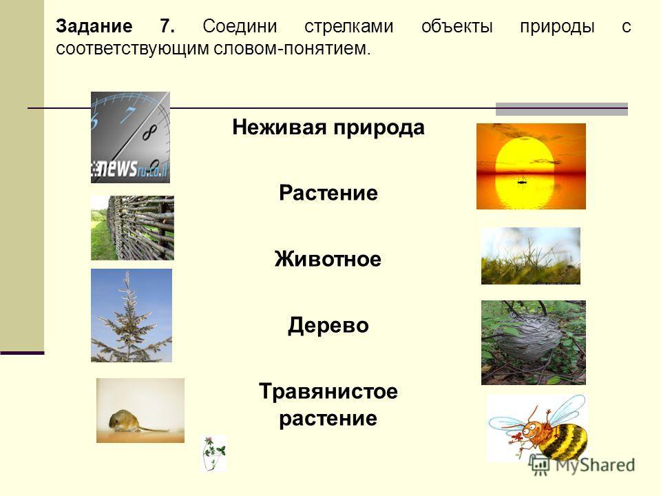 Задание 7. Соедини стрелками объекты природы с соответствующим словом-понятием. Неживая природа Растение Животное Дерево Травянистое растение