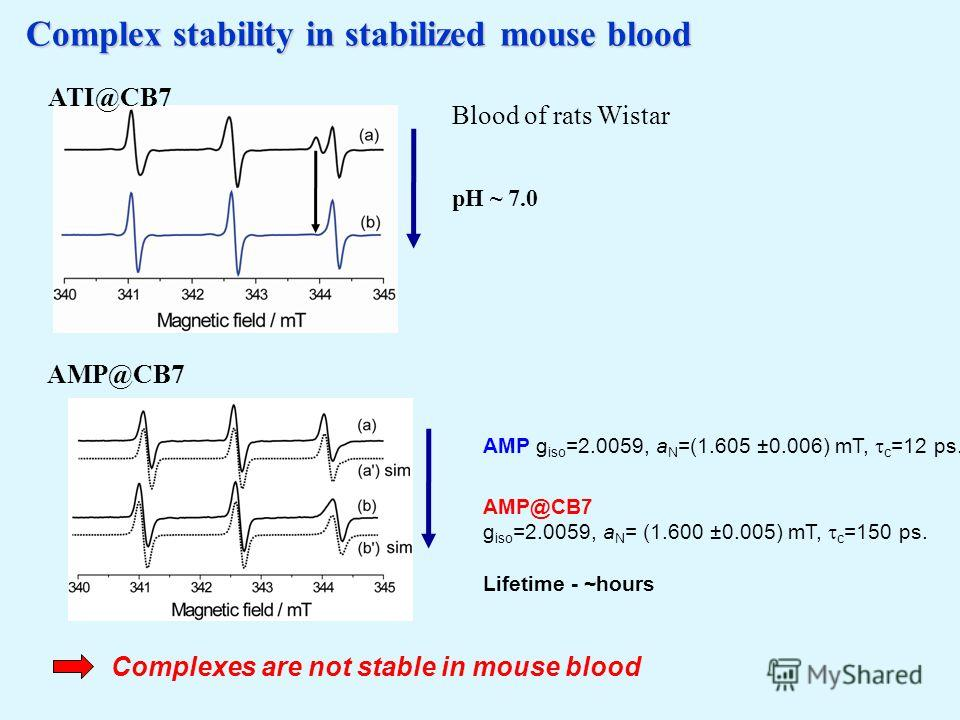 Complex stability in stabilized mouse blood Complexes are not stable in mouse blood Blood of rats Wistar pH ~ 7.0 AMP@CB7 ATI@CB7 AMP g iso =2.0059, a N =(1.605 ±0.006) mT, c =12 ps. AMP@CB7 g iso =2.0059, a N = (1.600 ±0.005) mT, c =150 ps. Lifetime