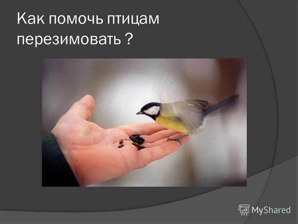 Как помочь птицам перезимовать ?