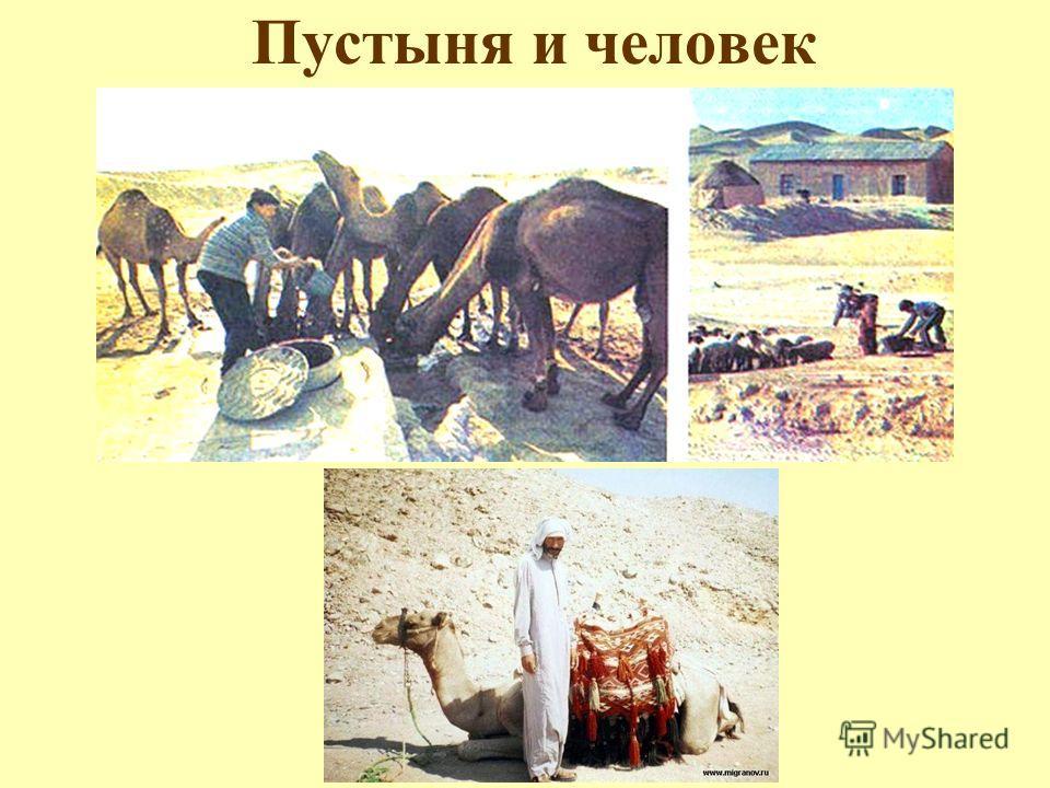 Пустыня и человек