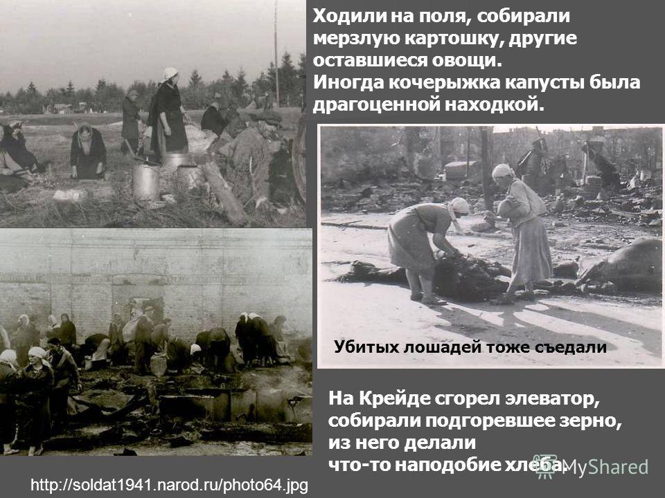 http://soldat1941.narod.ru/photo64.jpg Ходили на поля, собирали мерзлую картошку, другие оставшиеся овощи. Иногда кочерыжка капусты была драгоценной находкой. На Крейде сгорел элеватор, собирали подгоревшее зерно, из него делали что-то наподобие хлеб