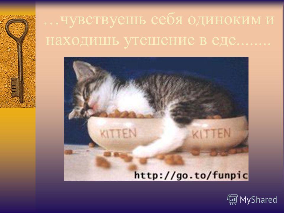 …чувствуешь себя одиноким и находишь утешение в еде........