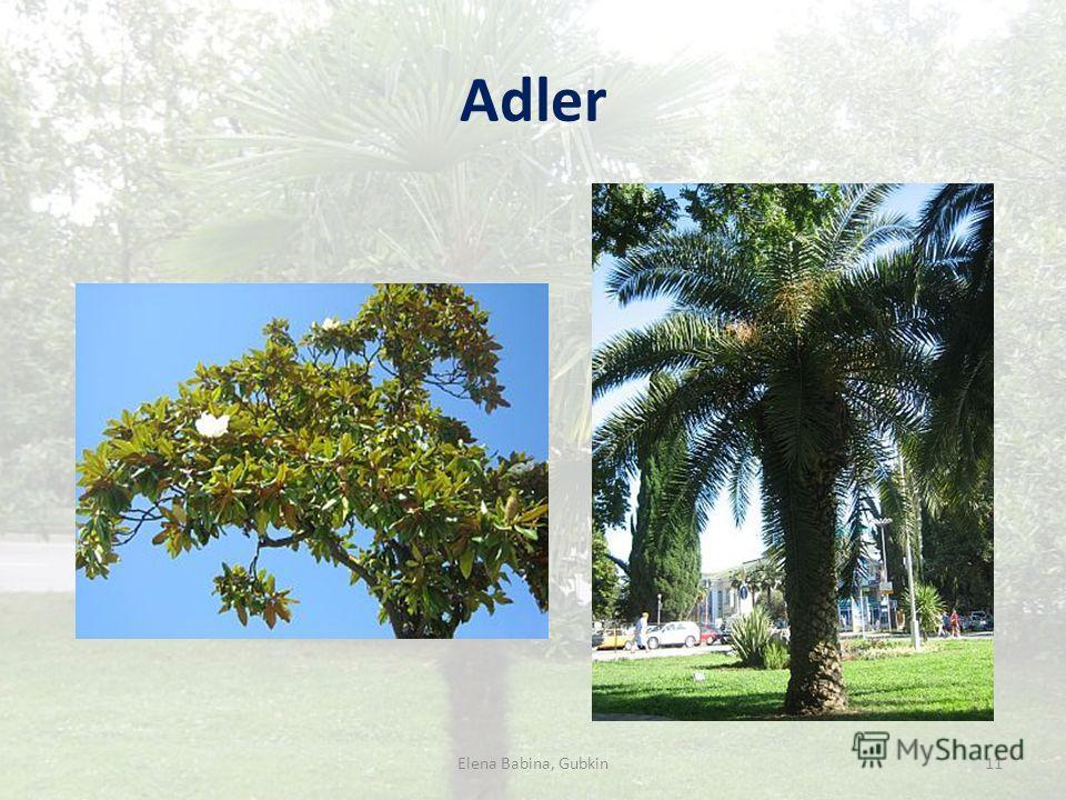 Adler 11Elena Babina, Gubkin