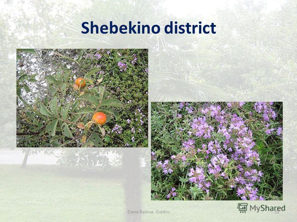 Shebekino district Elena Babina, Gubkin32