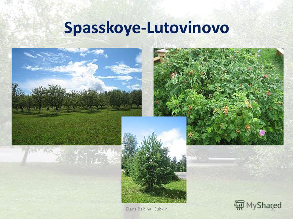 Spasskoye-Lutovinovo Elena Babina, Gubkin35