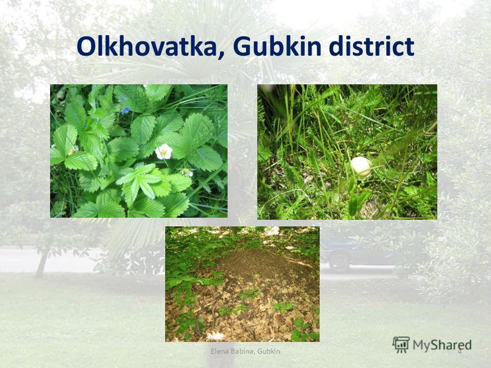 Olkhovatka, Gubkin district Elena Babina, Gubkin4