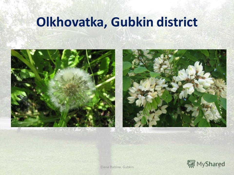 Olkhovatka, Gubkin district Elena Babina, Gubkin6
