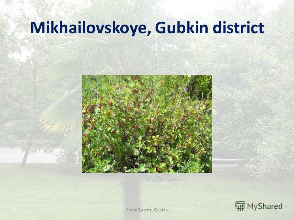 Mikhailovskoye, Gubkin district Elena Babina, Gubkin7