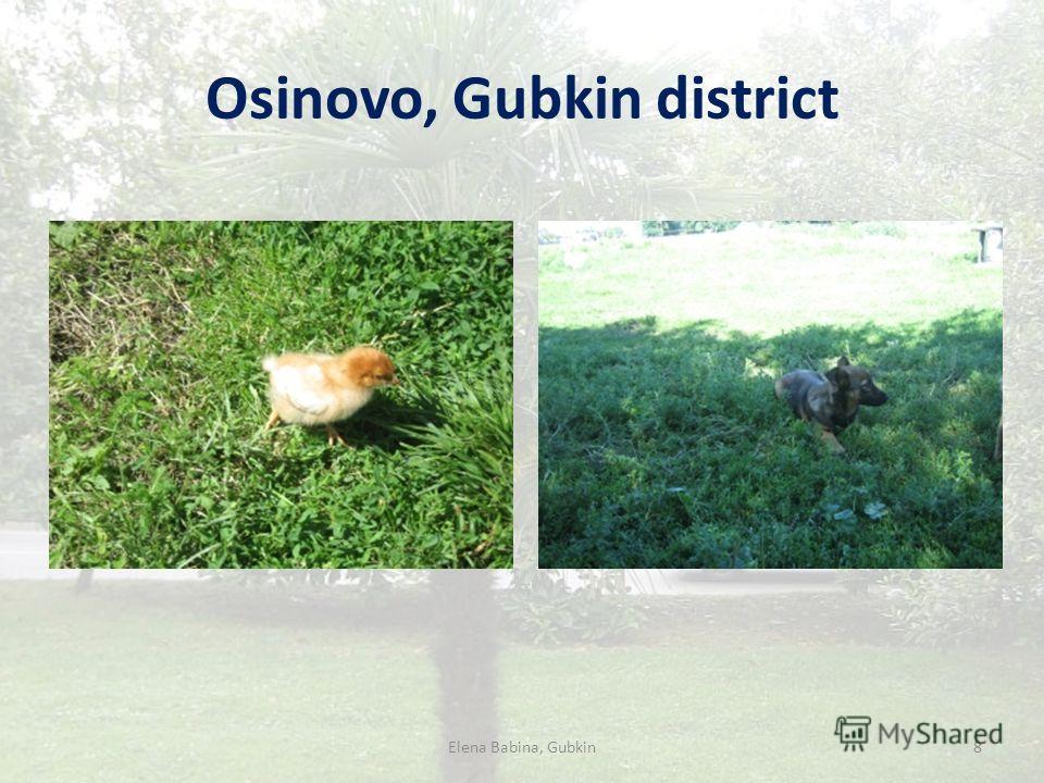 Osinovo, Gubkin district Elena Babina, Gubkin8