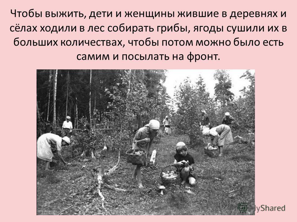 Чтобы выжить, дети и женщины жившие в деревнях и сёлах ходили в лес собирать грибы, ягоды сушили их в больших количествах, чтобы потом можно было есть самим и посылать на фронт.