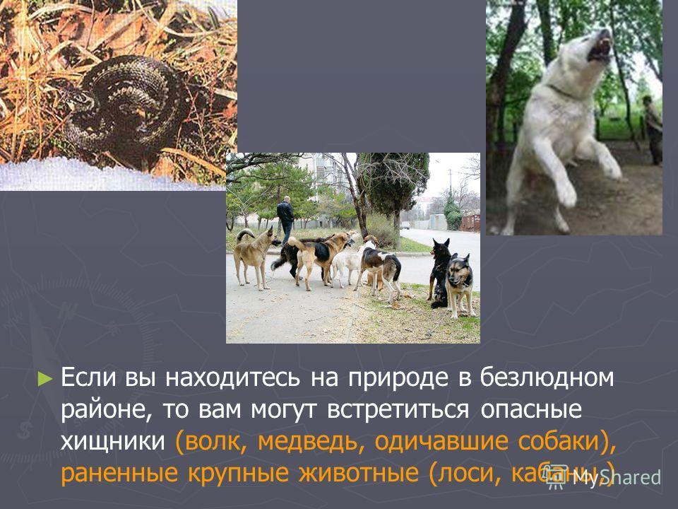 Если вы находитесь на природе в безлюдном районе, то вам могут встретиться опасные хищники (волк, медведь, одичавшие собаки), раненные крупные животные (лоси, кабаны,)