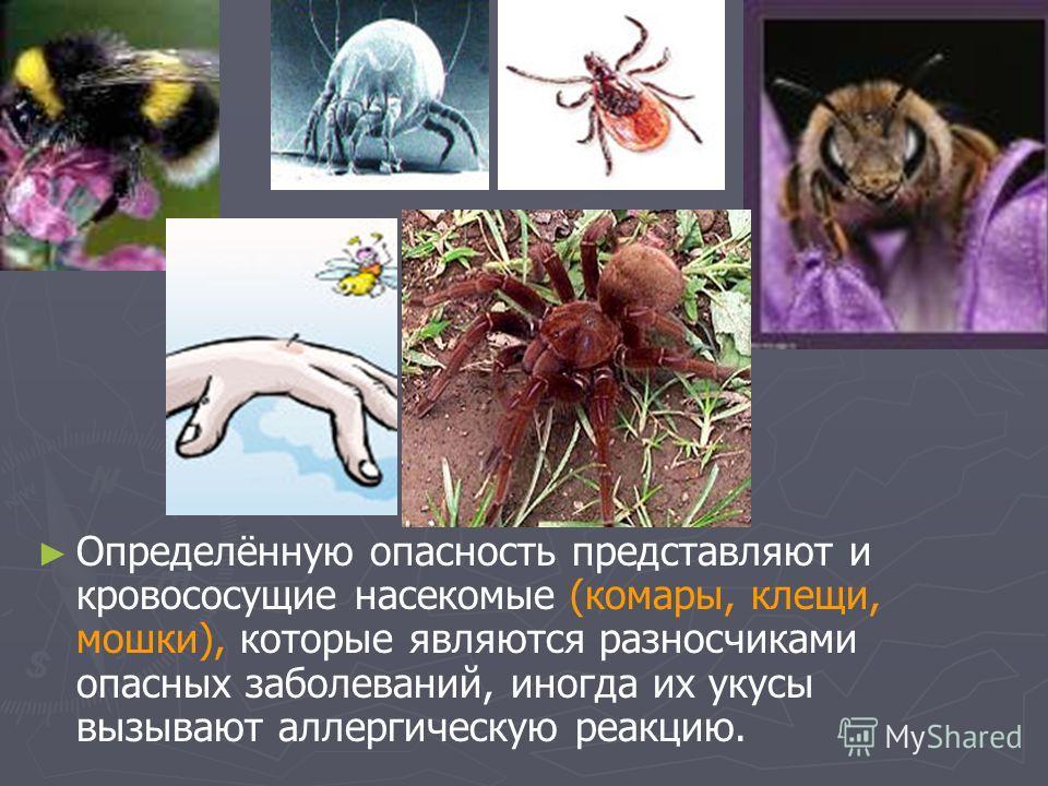 Определённую опасность представляют и кровососущие насекомые (комары, клещи, мошки), которые являются разносчиками опасных заболеваний, иногда их укусы вызывают аллергическую реакцию.