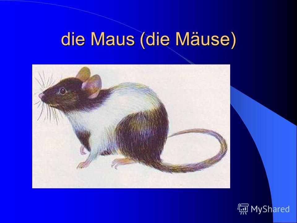 die Maus (die Mäuse)