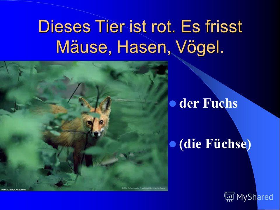 Dieses Tier ist rot. Es frisst Mäuse, Hasen, Vögel. der Fuchs (die Füchse)