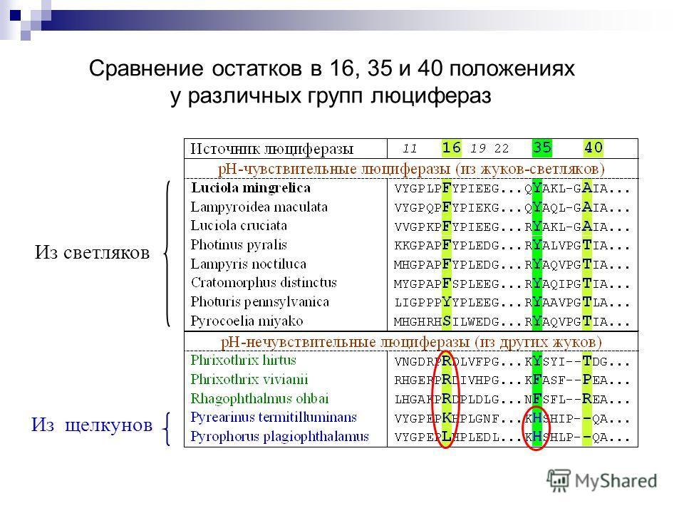 Сравнение остатков в 16, 35 и 40 положениях у различных групп люцифераз Из щелкунов Из светляков