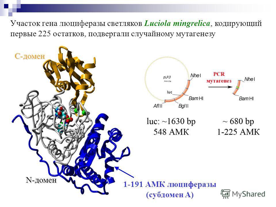 1-191 АМК люциферазы (субдомен A) Участок гена люциферазы светляков Luciola mingrelica, кодирующий первые 225 остатков, подвергали случайному мутагенезу C-домен N-домен
