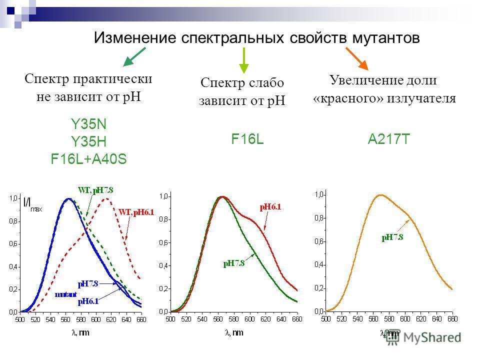 Изменение спектральных свойств мутантов Спектр практически не зависит от pH Спектр слабо зависит от pH Увеличение доли «красного» излучателя Y35N Y35H F16L+A40S F16LA217T