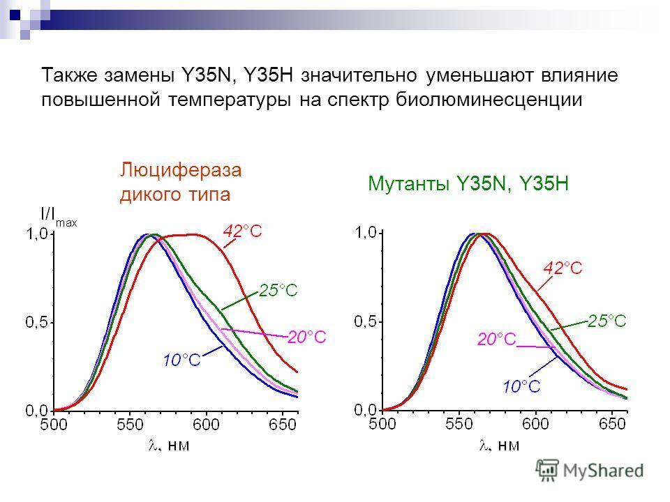 Также замены Y35N, Y35H значительно уменьшают влияние повышенной температуры на спектр биолюминесценции Люцифераза дикого типа Мутанты Y35N, Y35H
