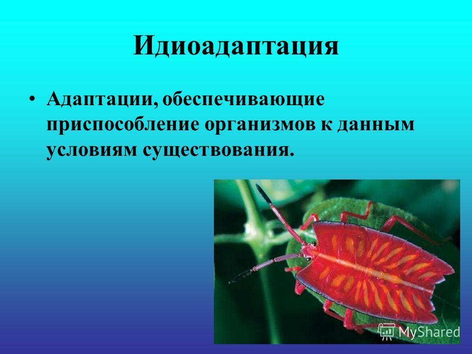 Идиоадаптация Адаптации, обеспечивающие приспособление организмов к данным условиям существования.