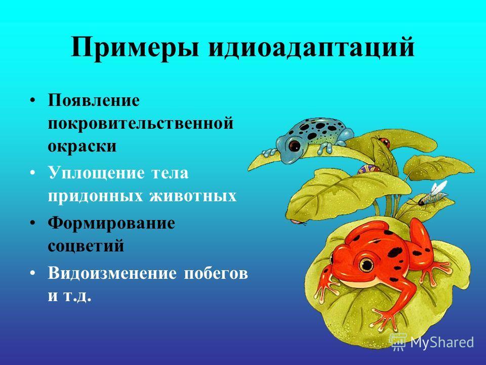 Примеры идиоадаптаций Появление покровительственной окраски Уплощение тела придонных животных Формирование соцветий Видоизменение побегов и т.д.