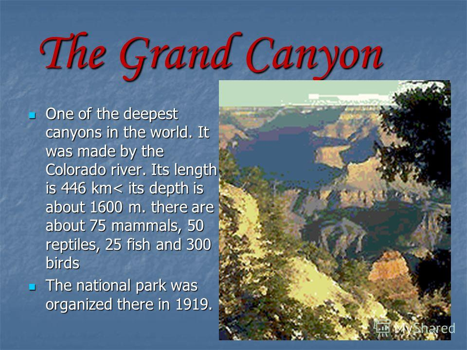 The Grand Canyon One of the deepest canyons in the world. It was made by the Colorado river. Its length is 446 km< its depth is about 1600 m. there are about 75 mammals, 50 reptiles, 25 fish and 300 birds One of the deepest canyons in the world. It w