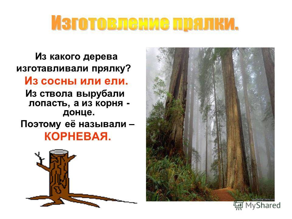 Из какого дерева изготавливали прялку? Из сосны или ели. Из ствола вырубали лопасть, а из корня - донце. Поэтому её называли – КОРНЕВАЯ.