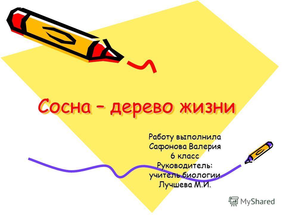 Cосна – дерево жизни Cосна – дерево жизни Работу выполнила Сафонова Валерия 6 класс Руководитель: учитель биологии Лучшева М.И.