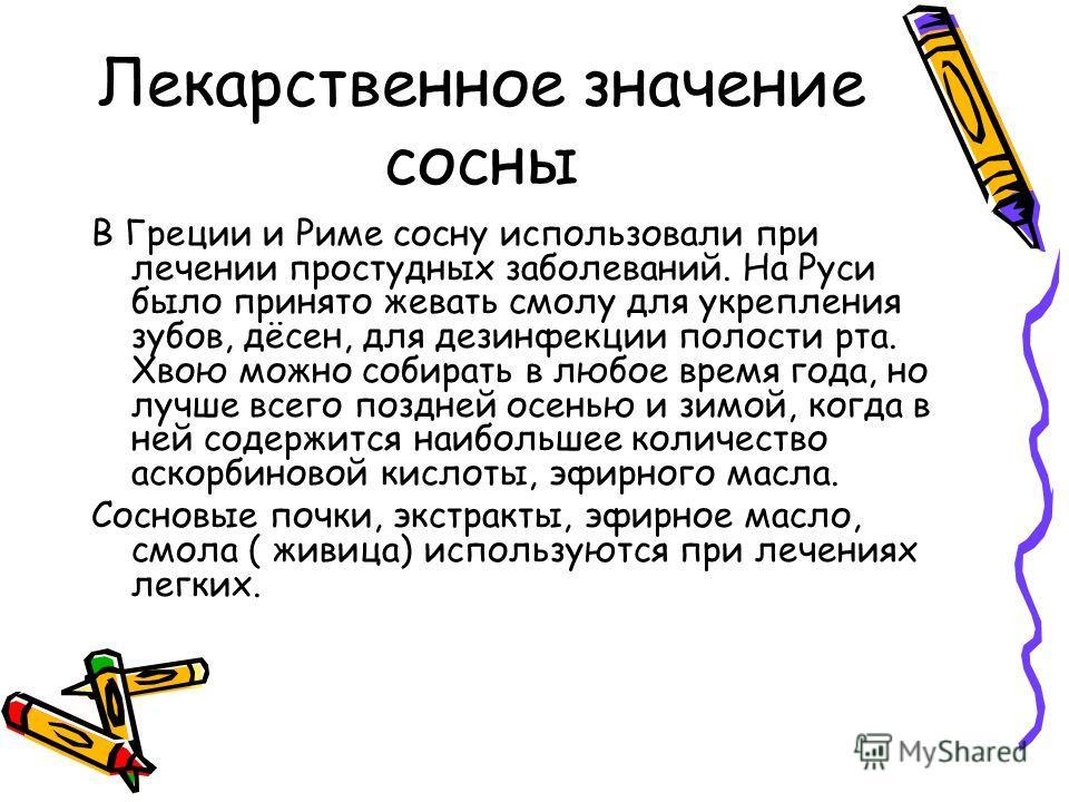 Лекарственное значение сосны В Греции и Риме сосну использовали при лечении простудных заболеваний. На Руси было принято жевать смолу для укрепления зубов, дёсен, для дезинфекции полости рта. Хвою можно собирать в любое время года, но лучше всего поз