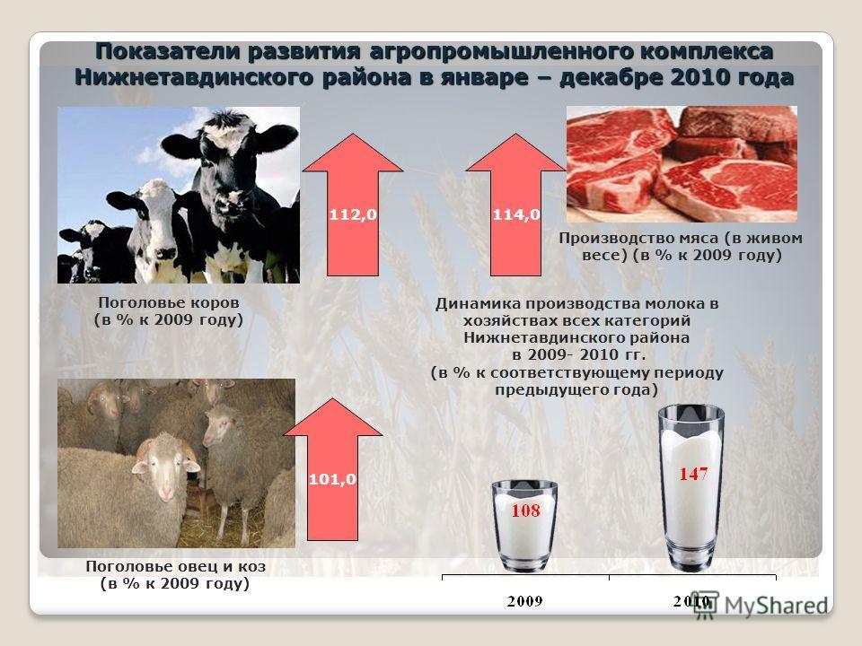Динамика производства молока в хозяйствах всех категорий Нижнетавдинского района в 2009- 2010 гг. (в % к соответствующему периоду предыдущего года) 114,0 Производство мяса (в живом весе) (в % к 2009 году) Показатели развития агропромышленного комплек