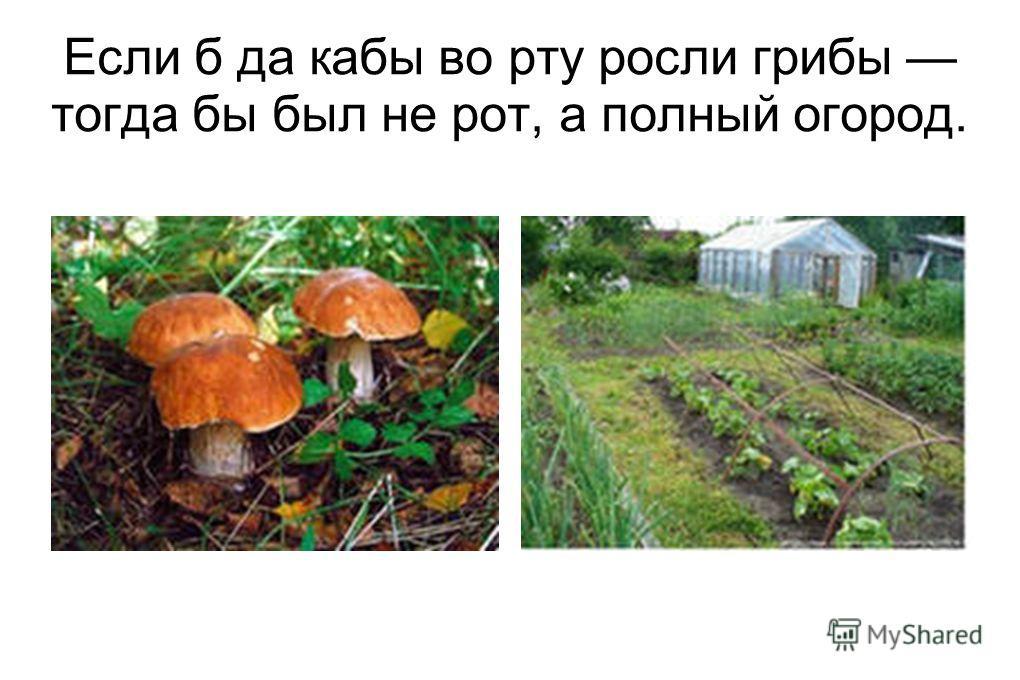 Если б да кабы во рту росли грибы тогда бы был не рот, а полный огород.
