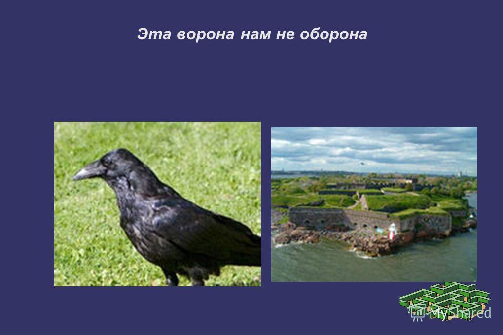 Эта ворона нам не оборона
