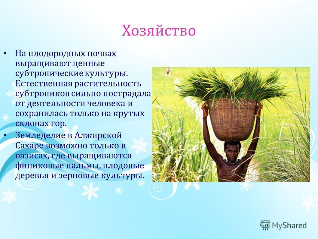 Хозяйство На плодородных почвах выращивают ценные субтропические культуры. Естественная растительность субтропиков сильно пострадала от деятельности человека и сохранилась только на крутых склонах гор. Земледелие в Алжирской Сахаре возможно только в