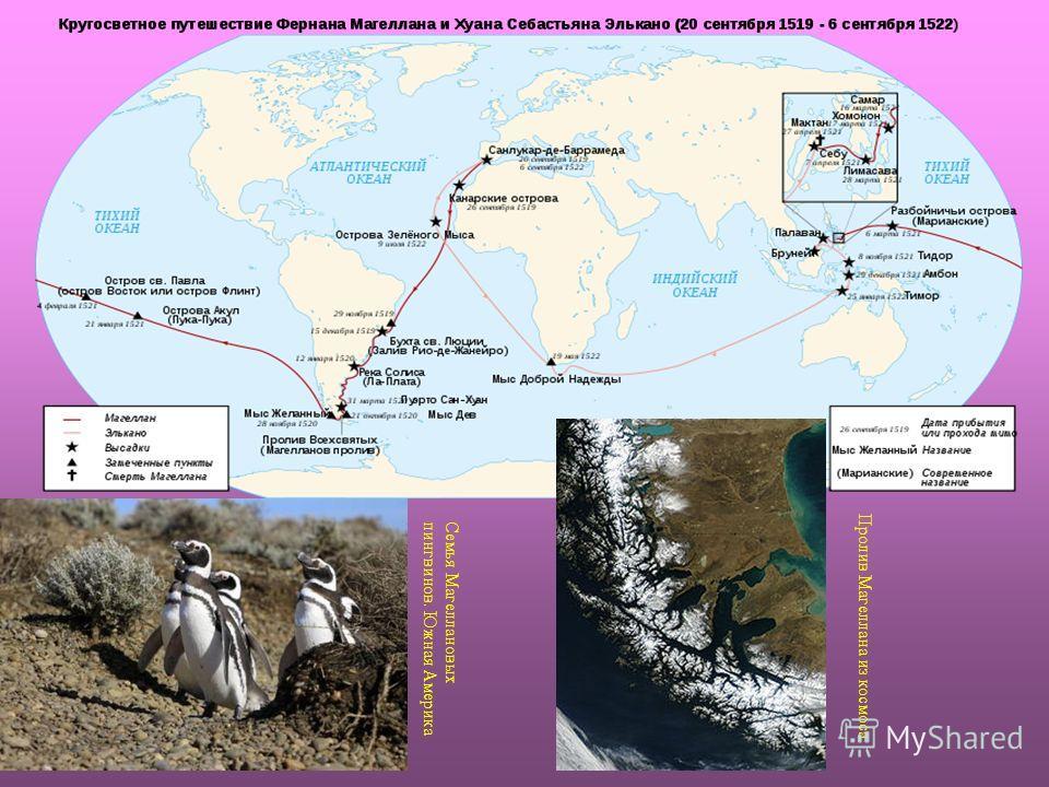 Семья Магеллановыхпингвинов. Южная Америка Пролив Магеллана из космоса