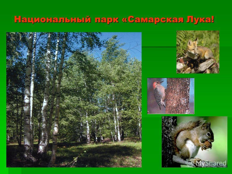Национальный парк «Самарская Лука!
