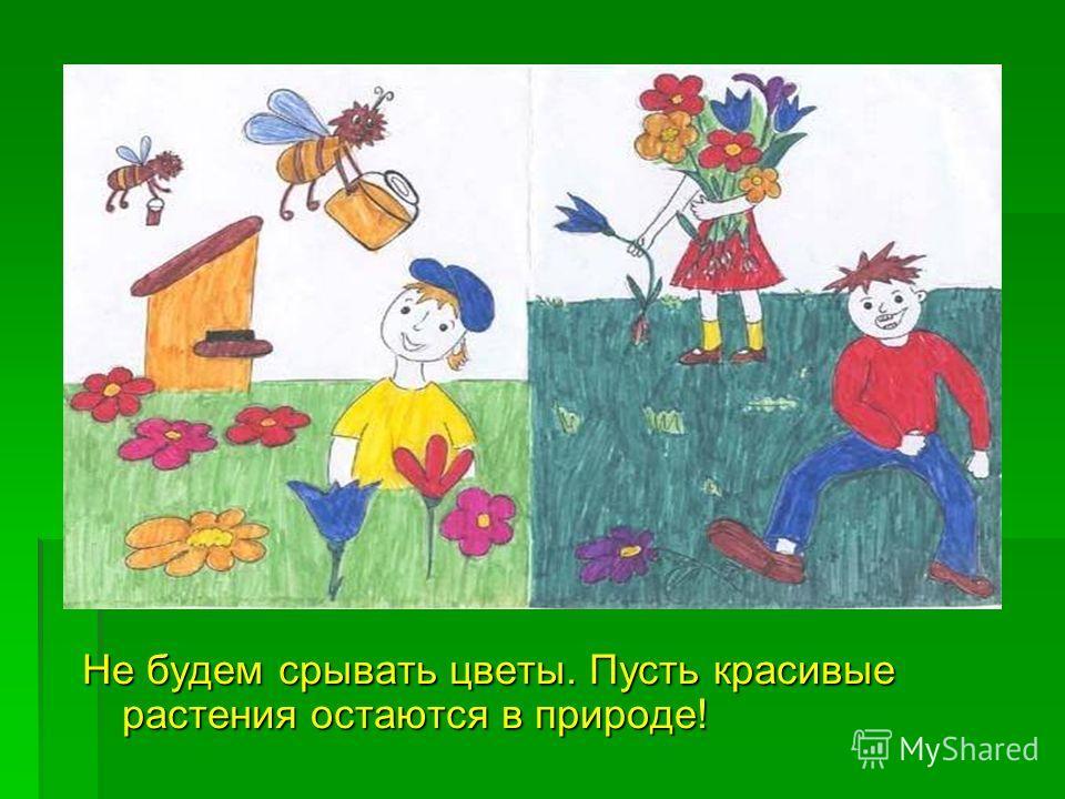 Не будем срывать цветы. Пусть красивые растения остаются в природе!