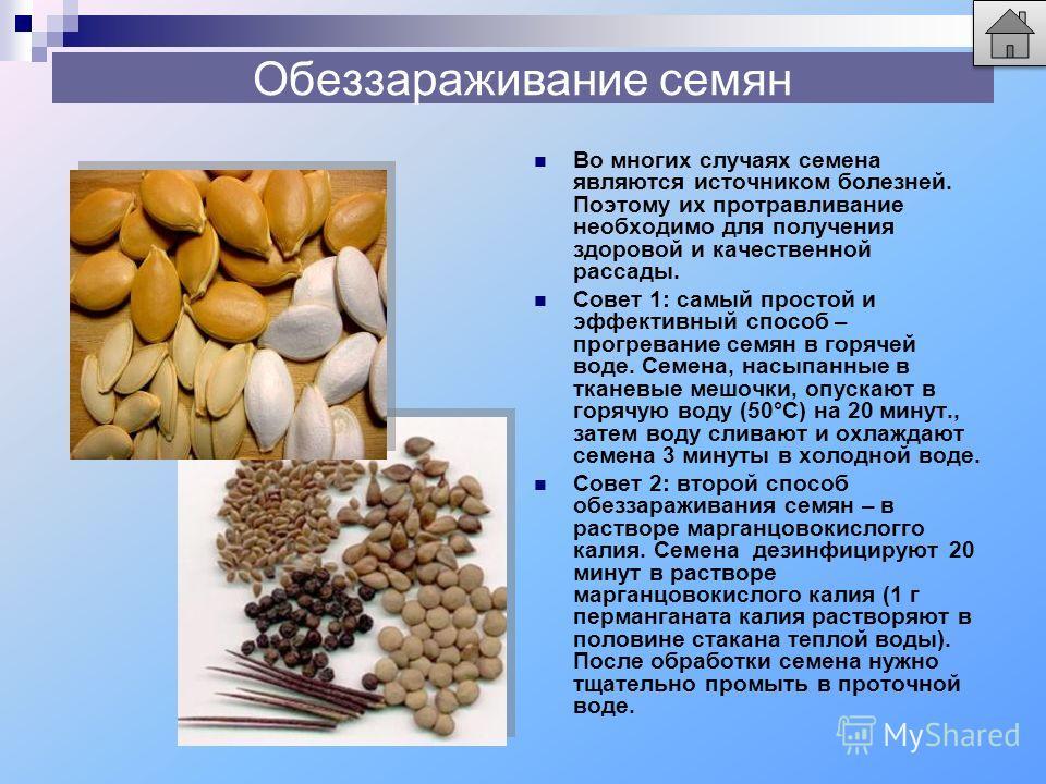 Обеззараживание семян Во многих случаях семена являются источником болезней. Поэтому их протравливание необходимо для получения здоровой и качественной рассады. Совет 1: самый простой и эффективный способ – прогревание семян в горячей воде. Семена, н