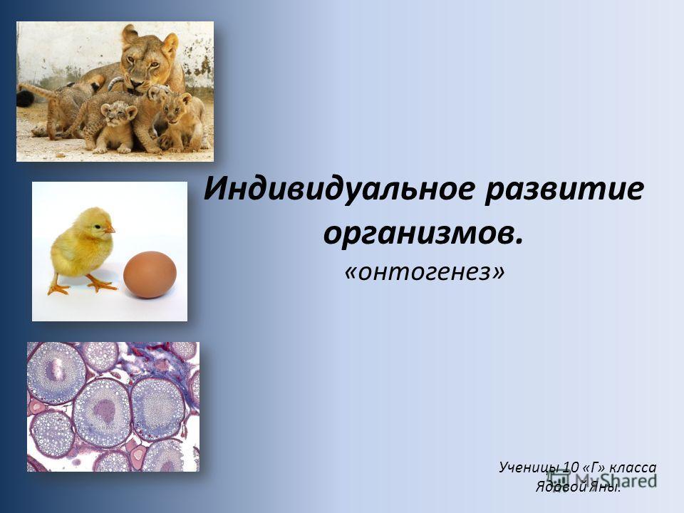 Индивидуальное развитие организмов. «онтогенез» Ученицы 10 «Г» класса Ядовой Яны.