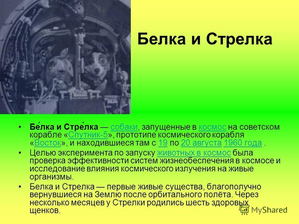 Белка и Стрелка Бе́лка и Стре́лка собаки, запущенные в космос на советском корабле «Спутник-5», прототипе космического корабля «Восток», и находившиеся там с 19 по 20 августа 1960 года.собакикосмосСпутник-5Восток1920 августа1960 года Целью эксперимен