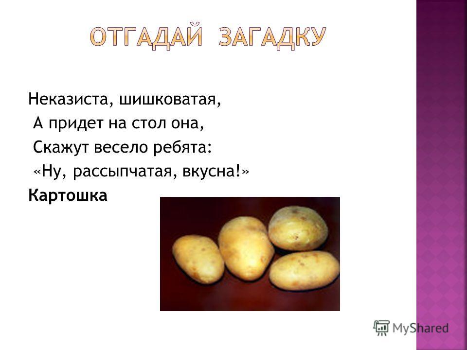 Неказиста, шишковатая, А придет на стол она, Скажут весело ребята: «Ну, рассыпчатая, вкусна!» Картошка