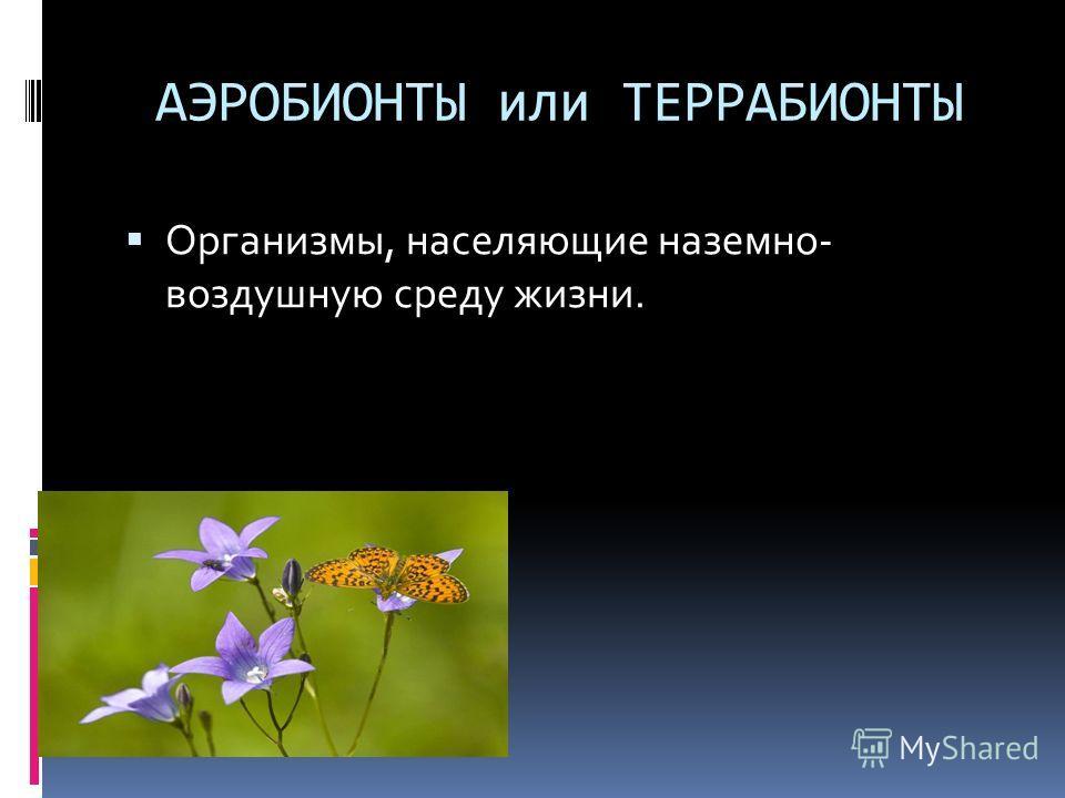 АЭРОБИОНТЫ или ТЕРРАБИОНТЫ Организмы, населяющие наземно- воздушную среду жизни.