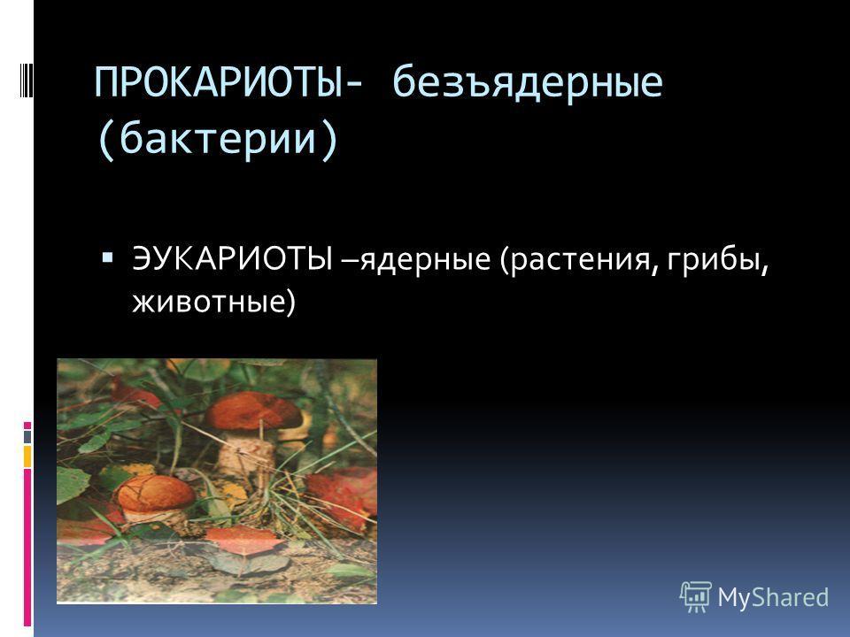 ПРОКАРИОТЫ- безъядерные (бактерии) ЭУКАРИОТЫ –ядерные (растения, грибы, животные)