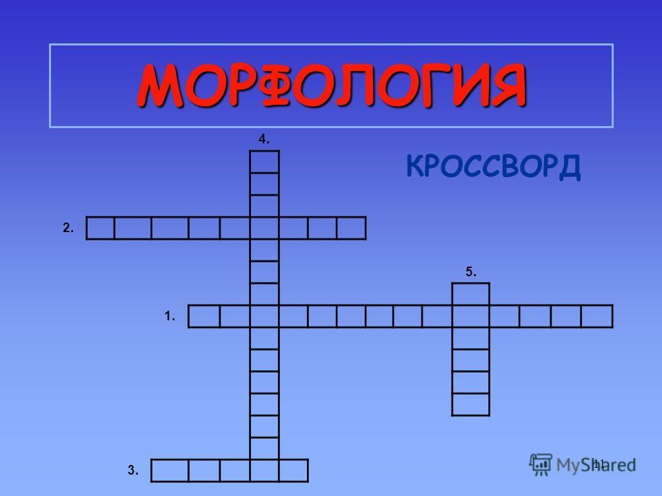 11 МОРФОЛОГИЯ КРОССВОРД 4. 2. 5. 1. 3.