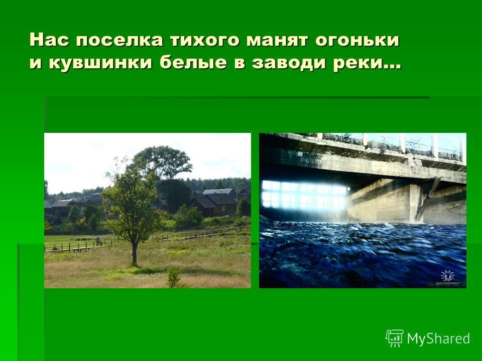 Нас поселка тихого манят огоньки и кувшинки белые в заводи реки…