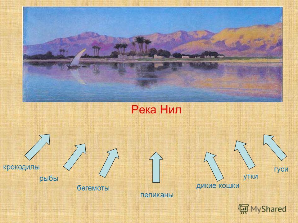Река Нил крокодилы дикие кошки рыбы бегемоты утки гуси пеликаны