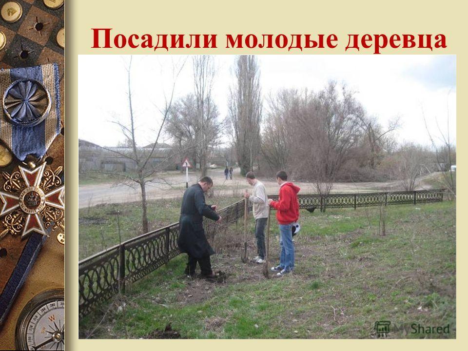 Посадили молодые деревца