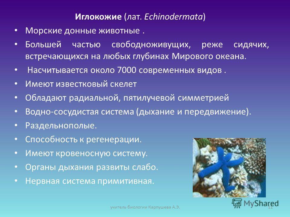 Иглокожие (лат. Echinodermata) Морские донные животные. Большей частью свободноживущих, реже сидячих, встречающихся на любых глубинах Мирового океана. Насчитывается около 7000 современных видов. Имеют известковый скелет Обладают радиальной, пятилучев