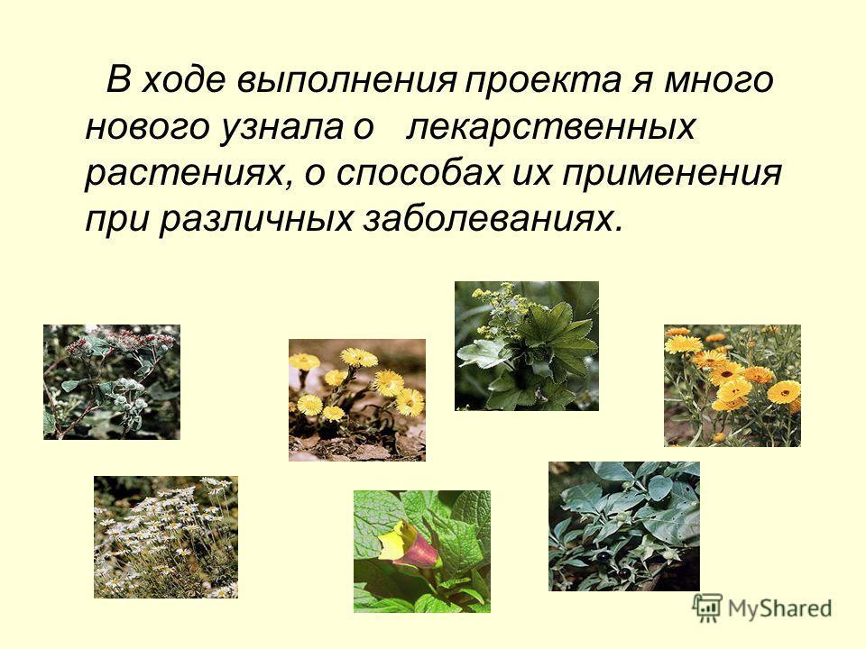 В ходе выполнения проекта я много нового узнала о лекарственных растениях, о способах их применения при различных заболеваниях.