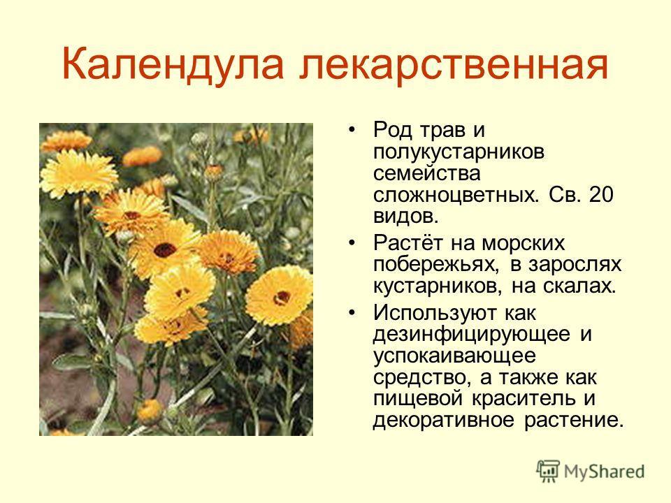 Календула лекарственная Род трав и полукустарников семейства сложноцветных. Св. 20 видов. Растёт на морских побережьях, в зарослях кустарников, на скалах. Используют как дезинфицирующее и успокаивающее средство, а также как пищевой краситель и декора